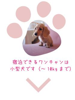 宿泊できるワンチャンは小型犬です。(10kgまで)